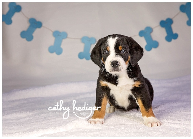 loveland puppy photography